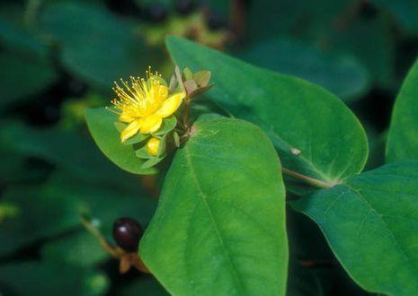 birnbaum krankheiten gelbe flecken
