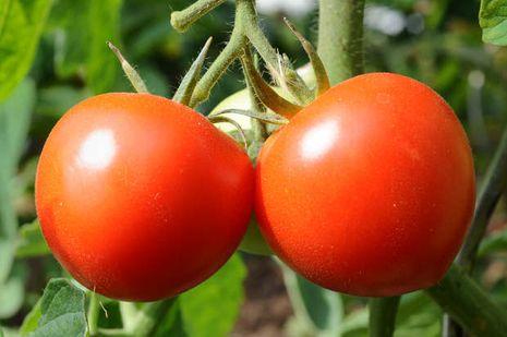 Baum Tomate und Gurke, um Gewicht zu verlieren