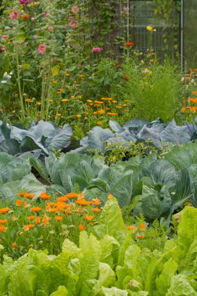 gemüse: mischkultur, Garten ideen